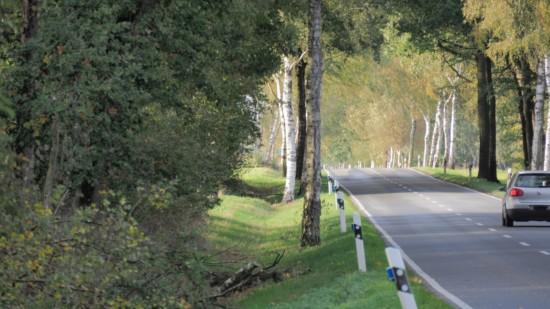 Die L 776 ist in den Seitenrändern z.T. stark bewaldet.